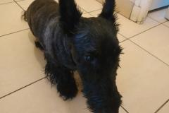 Grim - Ô chiens urbains, garde de chiens et promenades d'hygiène à Annecy