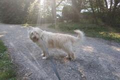 Cheddar - Ô chiens urbains, garde de chiens et promenades d'hygiène à Annecy