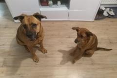 Abby et Louna - Ô chiens urbains, garde de chiens et promenades d'hygiène à Annecy