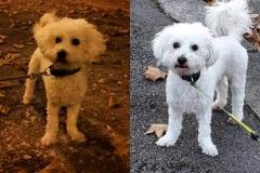 Minimoy - Ô chiens urbains, garde de chiens et promenades d'hygiène à Annecy