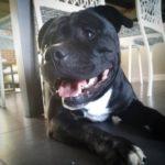 Memphis - photo animalière Annecy - Ô chiens urbains