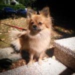 Lulu - photo animalière Annecy - Ô chiens urbains