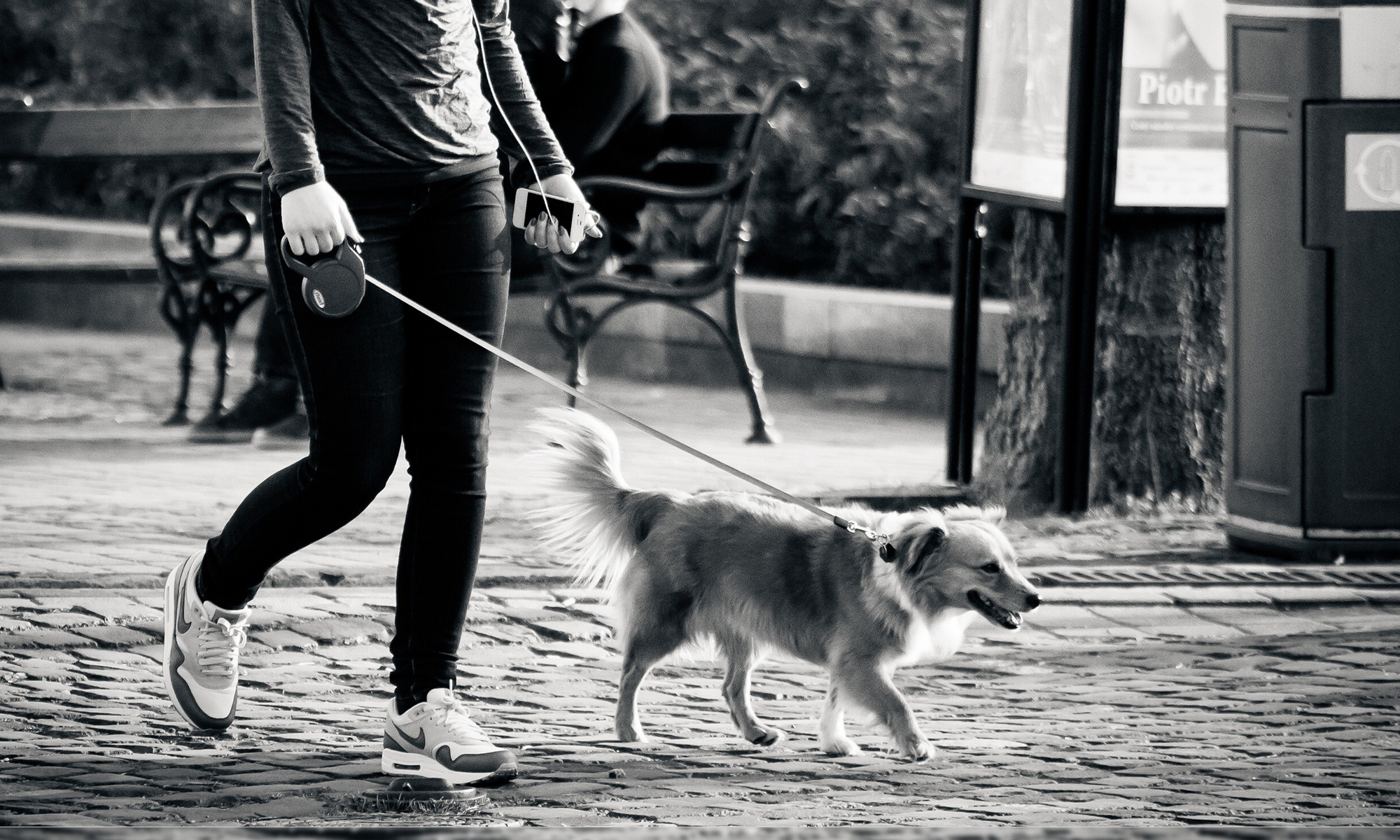 Ô chiens urbains Annecy