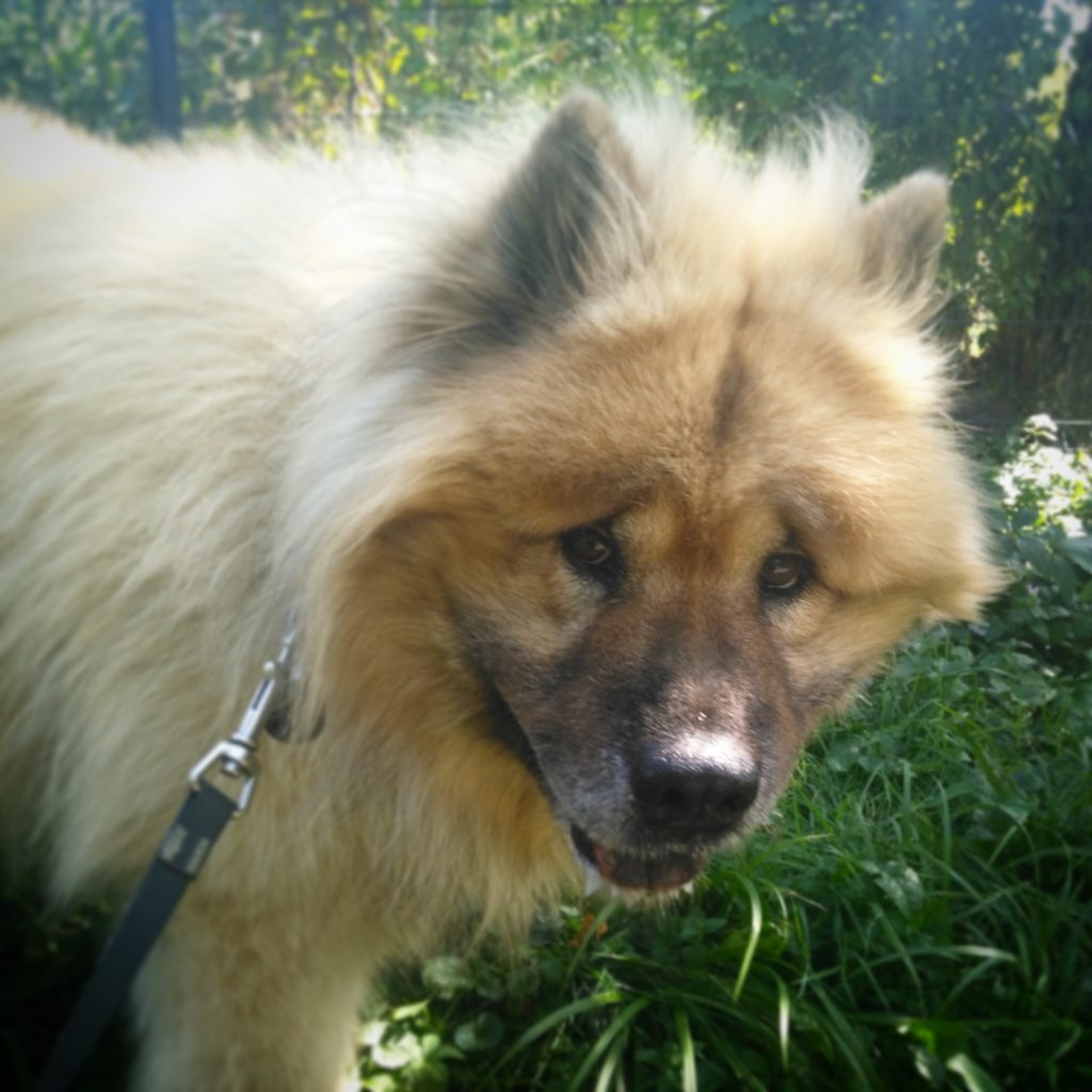 Caigo - photo animalière Annecy - Ô chiens urbains