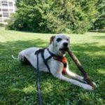 Socialisation de votre chien à Annecy