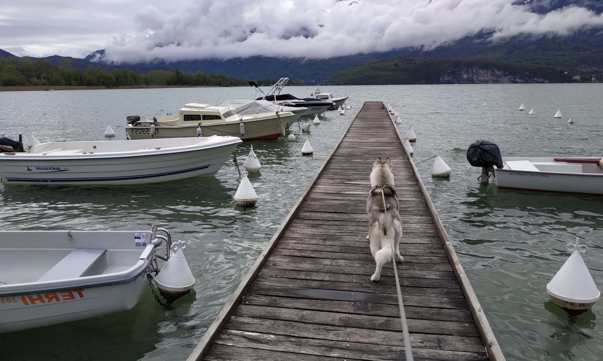 Ô chiens urbains @Annecy